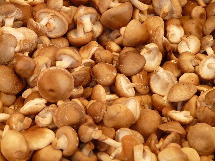 shitake-funghi